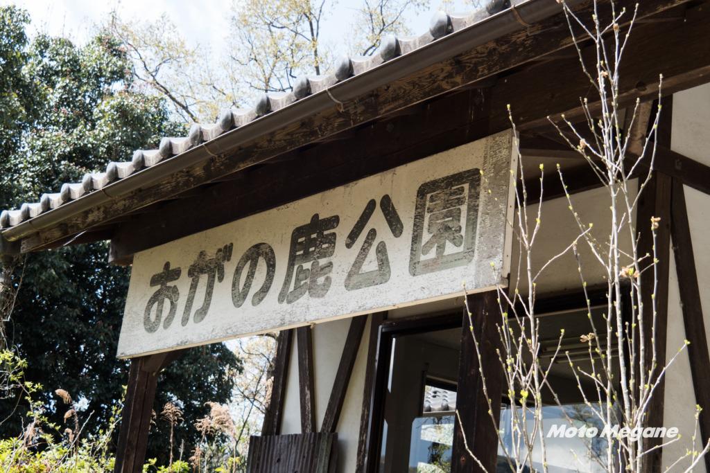 小鹿神社参拝の帰りには鹿に餌をあげていってください!