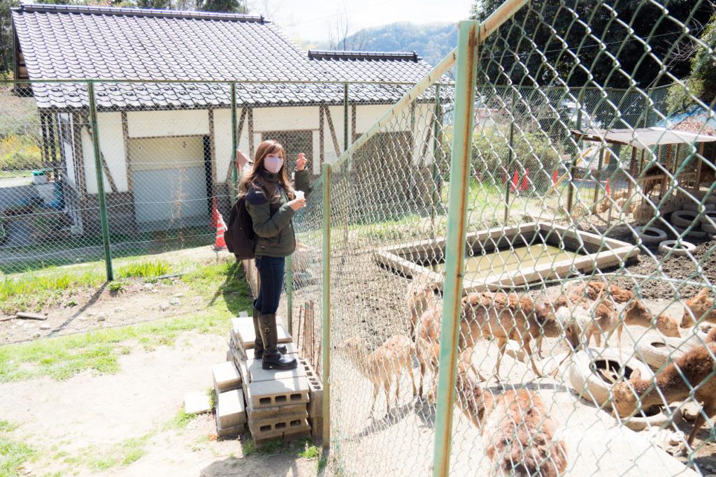 小鹿神社隣にはおがの鹿公園があります